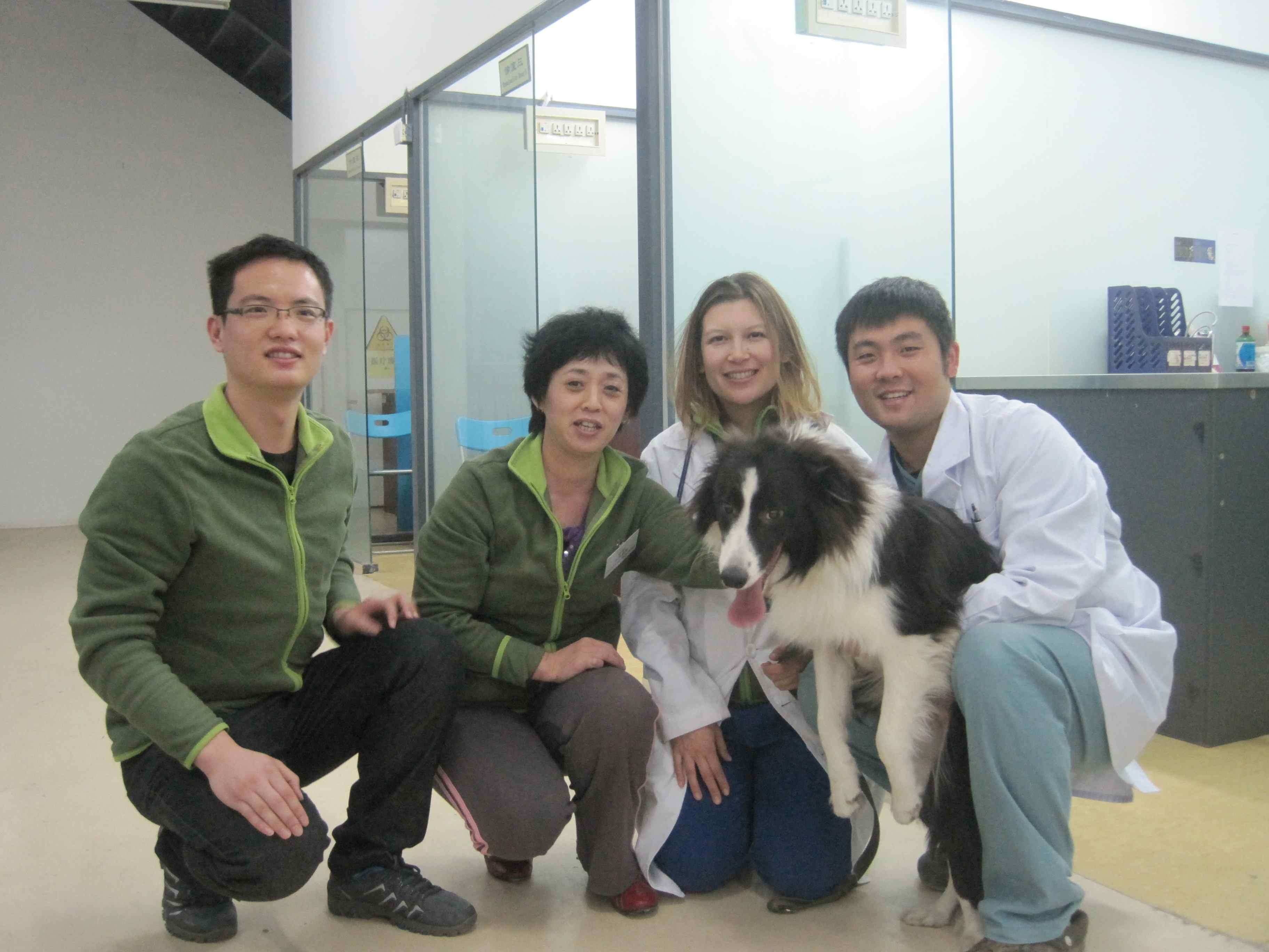vets  border collie c